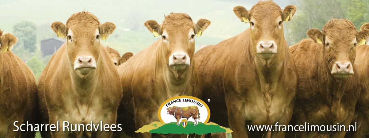 France Limousin rundvlees
